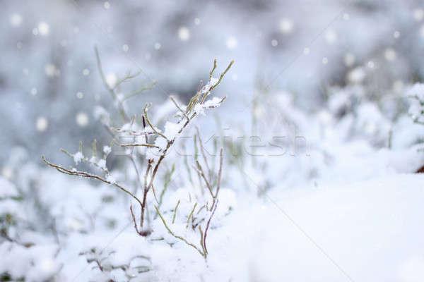 Pierwszy śniegu wrażenie piękna zimą opadów śniegu Zdjęcia stock © Anterovium