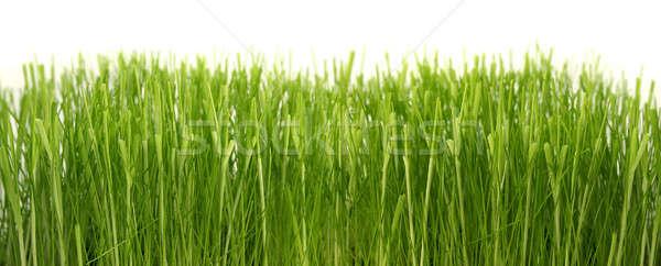 Denso grama verde crescente fechar branco primavera Foto stock © Anterovium