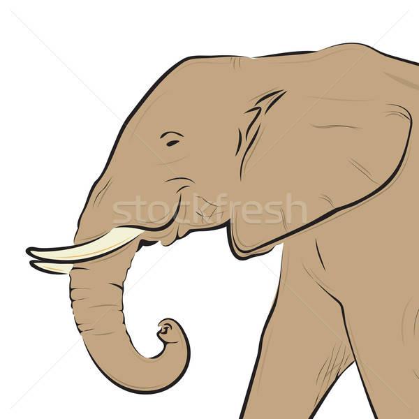 Olifant hoofd tekening geïsoleerd witte macht Stockfoto © antkevyv