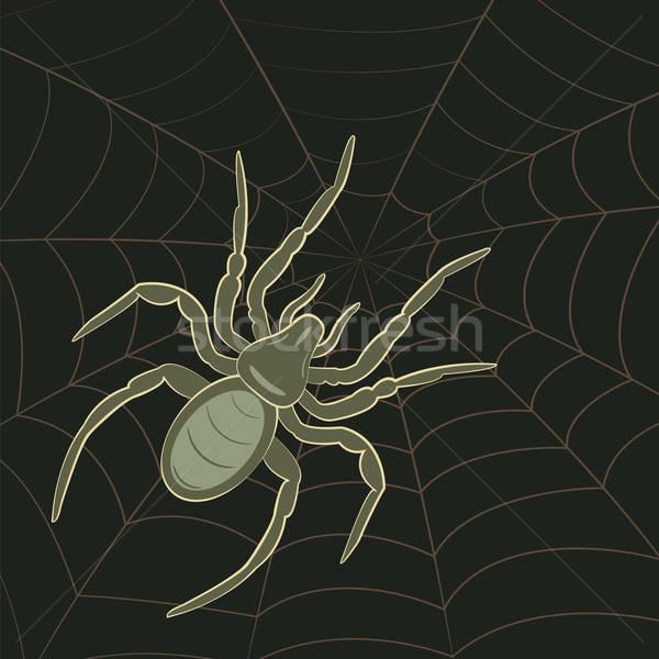 Spider on Web Stock photo © antkevyv