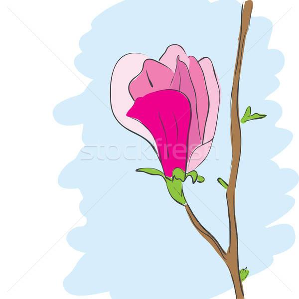 Magnolia roze bloem bloesem vector tekening illustratie Stockfoto © antkevyv