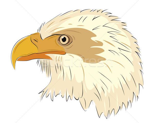 Adelaar hoofd geïsoleerd witte oog natuur Stockfoto © antkevyv