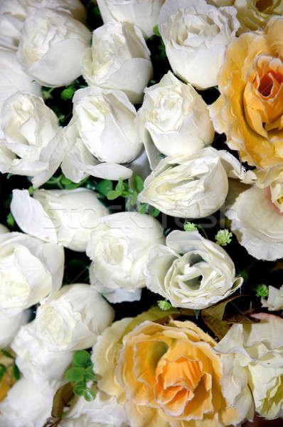 white and yellow rose Stock photo © antonihalim