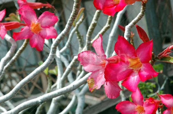 ストックフォト: 日本語 · 赤 · 花 · 花 · 自然 · 庭園