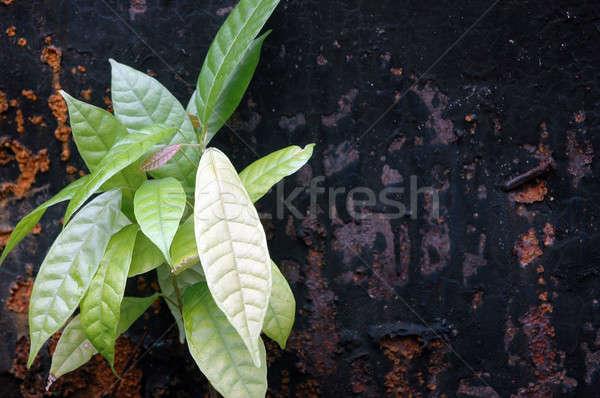 Oude metaal muur detail oppervlak textuur Stockfoto © antonihalim