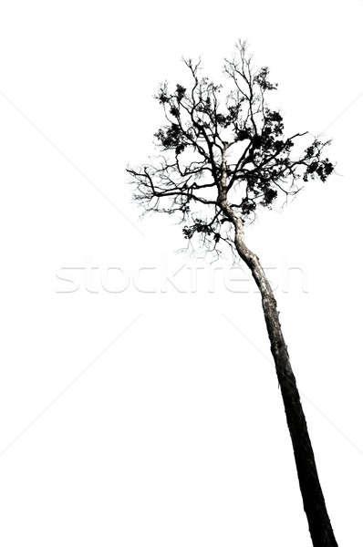 Hatalmas fák fa fa kert háttér Stock fotó © antonihalim