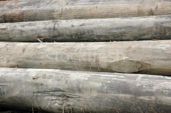 Köteg tűz fa erdő háttér energia Stock fotó © antonihalim
