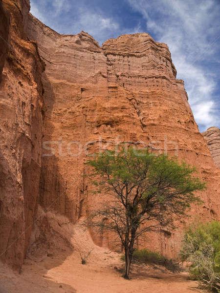 Tree on rocky mountains Stock photo © antonprado