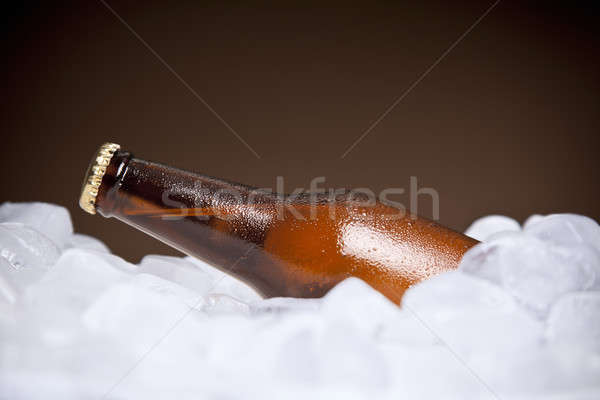 The cooler beer Stock photo © antonprado