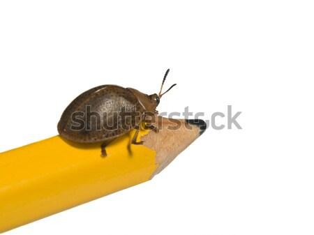 Bicho lápis isolado branco amarelo crescimento Foto stock © antonprado