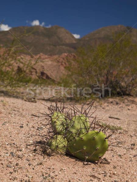 A hard growing Stock photo © antonprado