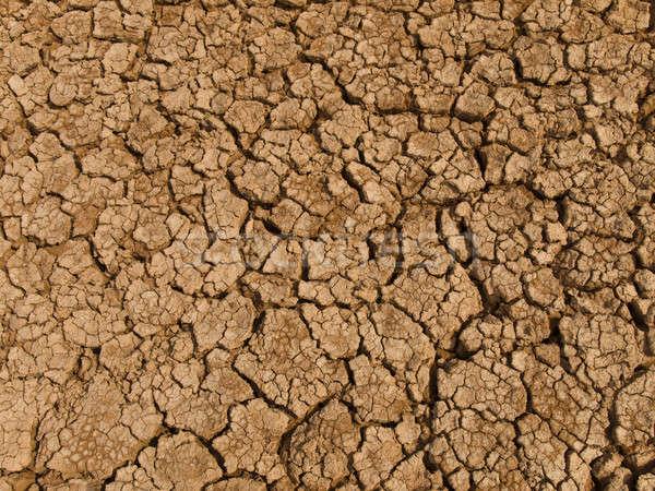 Drought Stock photo © antonprado