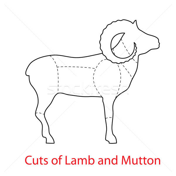 Cuts-of-Lamb-and-Mutton Stock photo © antoshkaforever