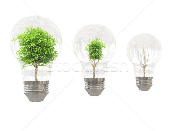 Stok fotoğraf: Ağaç · ampul · beyaz · cam · bitki