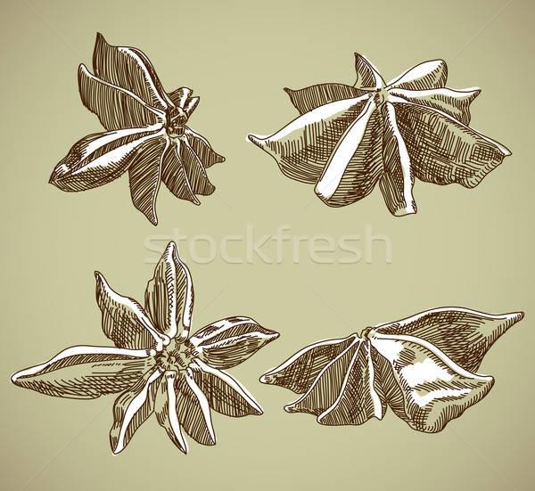 Duftenden Gewürz Illustration nützlich Designer Arbeit Stock foto © Aqua