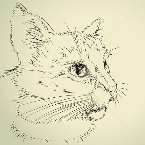 Disegno cat illustrazione utile designer lavoro Foto d'archivio © Aqua