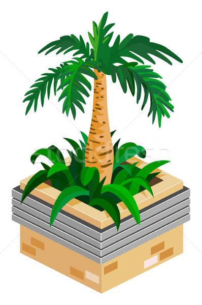 Palm Stock photo © araga