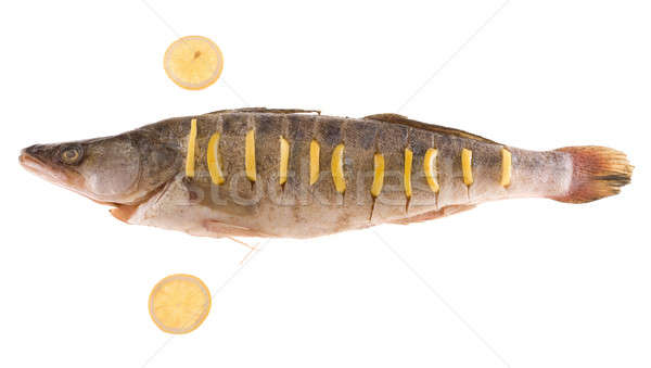 Fish isolated Stock photo © arcoss
