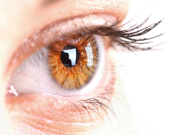 Nő szem hosszú szempilla űr szöveg Stock fotó © arcoss