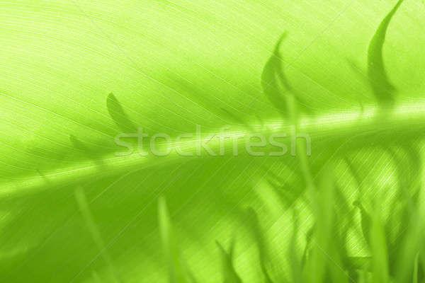 Levél növény közelkép víz textúra fű Stock fotó © arcoss