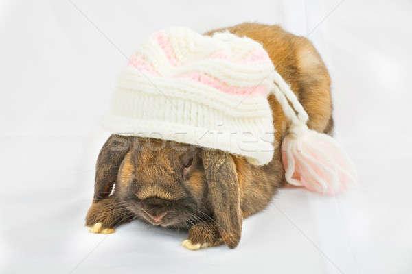 Кролики животного сидят ПЭТ мягкой мех Сток-фото © arcoss