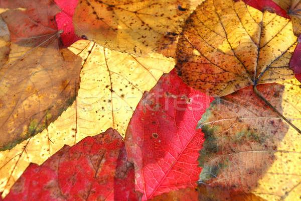 autumn Stock photo © arcoss
