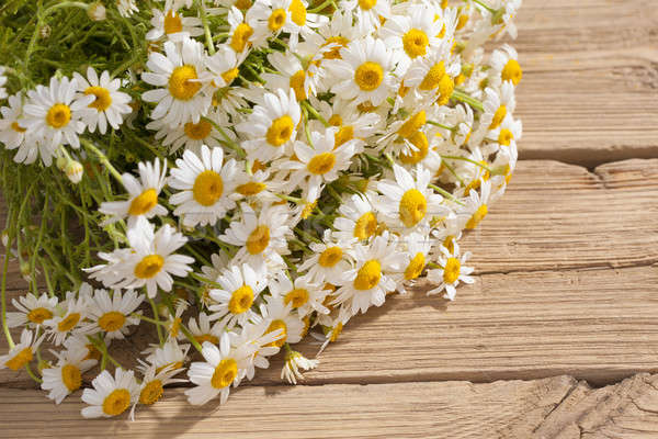 camomile flower on wood  Stock photo © arcoss