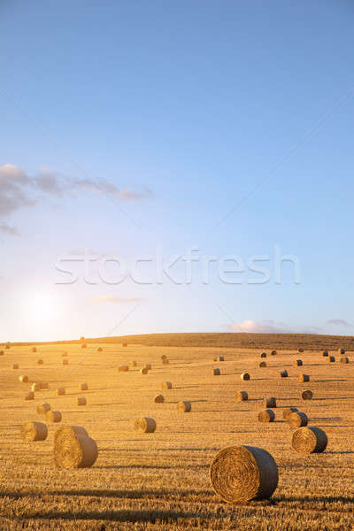 Stock photo: hay-roll on meadow against background