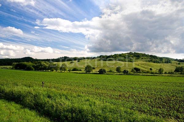 Stockfoto: Landschap · textuur · zon · natuur · zomer · veld