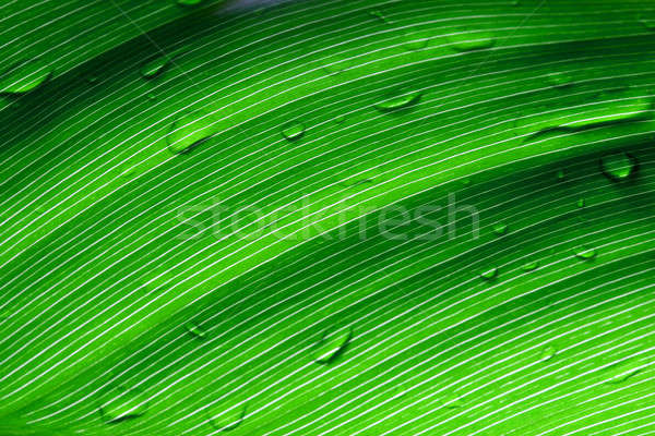 Beautiful green leaf with drops of water  Stock photo © arcoss