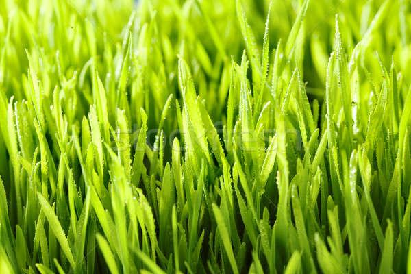 Fű vízcseppek reggel absztrakt természet nyár Stock fotó © arcoss