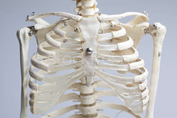 skeleton chest Stock photo © arcoss