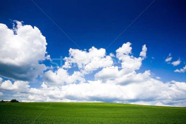 Tavasz mező fedett fű égbolt nap Stock fotó © arcoss