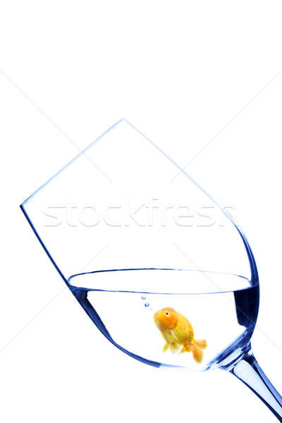 Goldfish in a glass Stock photo © aremafoto