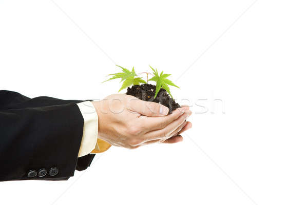 Business concept Stock photo © aremafoto