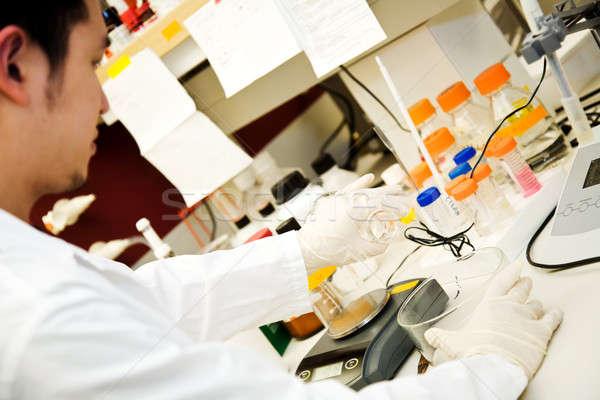 Working scientist Stock photo © aremafoto