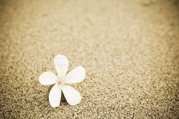 Stock photo: Flower on the beach