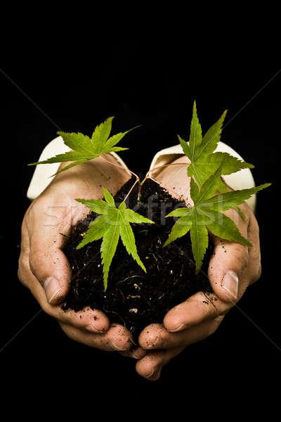 Zdjęcia stock: Biznesmen · nowego · roślin · shot · działalności
