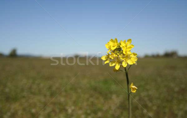Dernier une permanent fleur herbe fond Photo stock © aremafoto