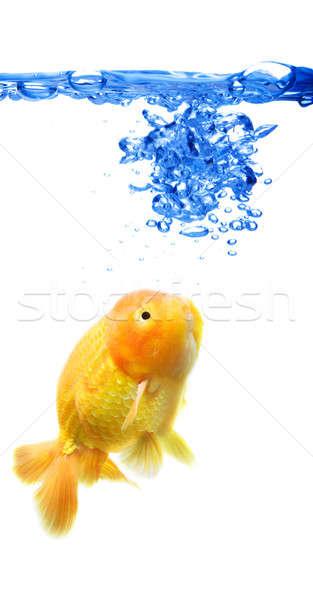 Goldfish выстрел рыбы цистерна аннотация синий Сток-фото © aremafoto