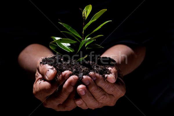 New life Stock photo © aremafoto