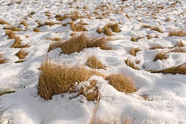 Snowy Field Stock photo © ArenaCreative
