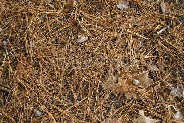 Pin aiguilles détail coup forêt étage Photo stock © ArenaCreative