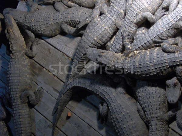 Faul Alligatoren Wasser Tiere heißen Stock foto © ArenaCreative