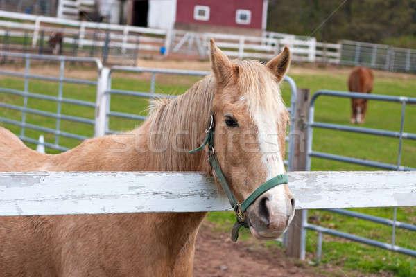 Brown Horse Stock photo © ArenaCreative