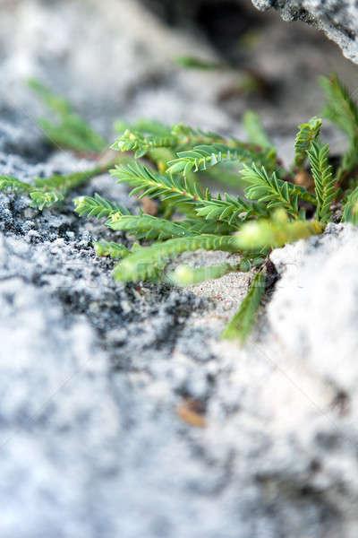 Tropikal yeşil bitki büyüyen dışarı Stok fotoğraf © arenacreative