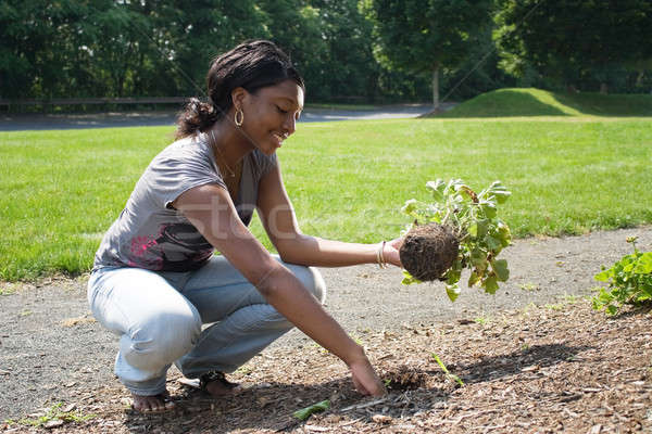 Woman Planting Flowers Stock photo © ArenaCreative
