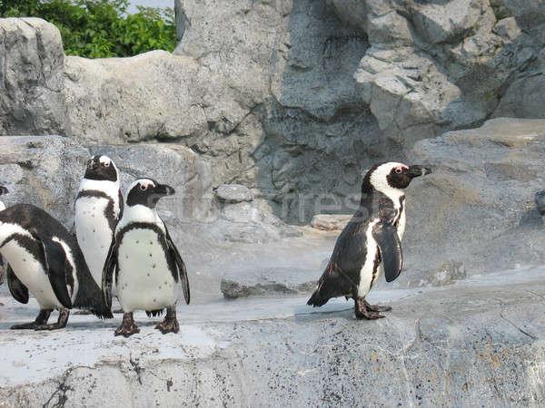Mean Penguins Stock photo © ArenaCreative