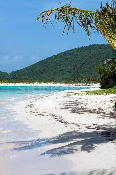 Flamenco praia árvores porto-riquenho Foto stock © ArenaCreative