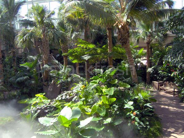 Pathway Through a Rainforest Stock photo © ArenaCreative